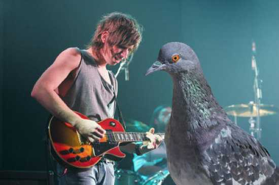 Kings Of Leon Concert With Pigeon 4C502F7702Cea