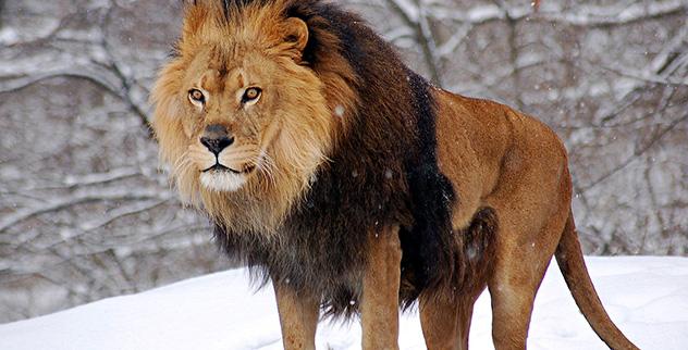 Top 10 Deadliest Animals - Listverse