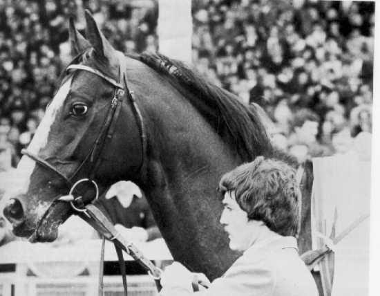 Horse Shergar