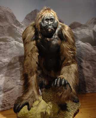 Gigantopithecus-Blackii