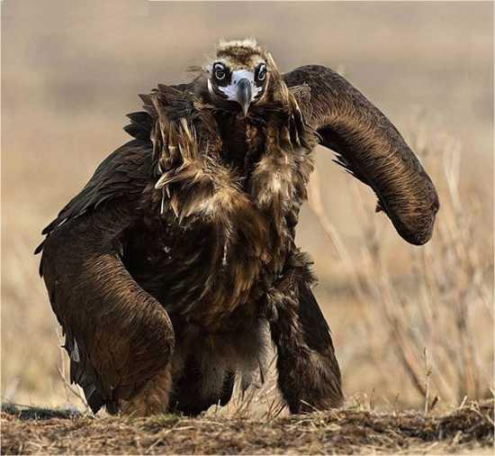 Mutant-Bird-493