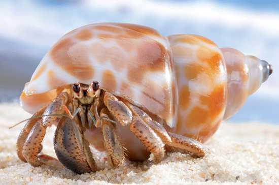 Hermit-Crab-Cove-B1