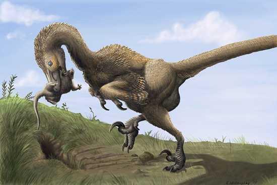 Saurornitholestes Digging Burrows Wahweap