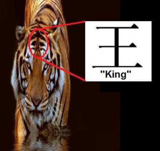Tiger%20Symbolism