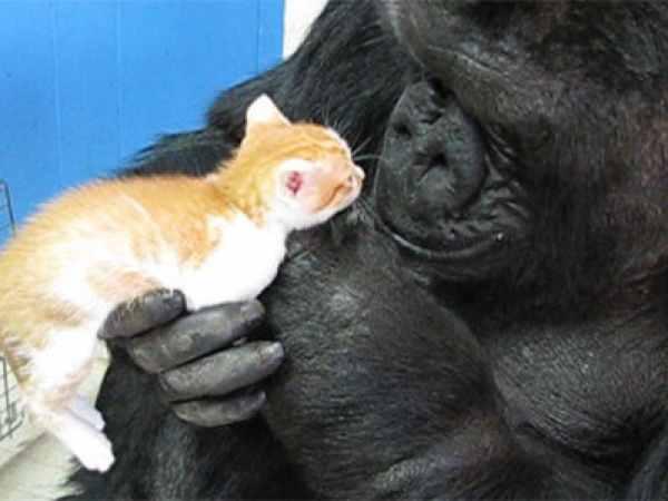 Koko Kitty Visit