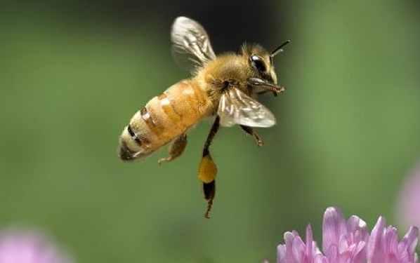 Bee 1442609C
