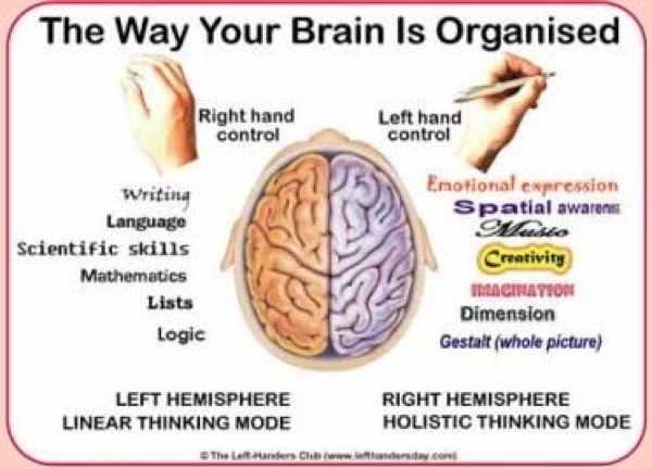 Brain-Organisation