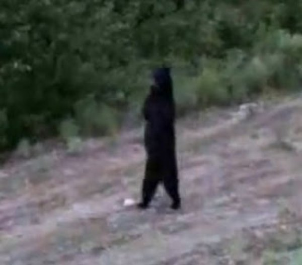 Bear Bigfoot