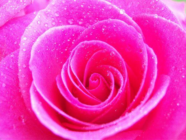 Pink-Pink-Color-4286512-2560-1920-1Mlnj7Q-24Akzj4
