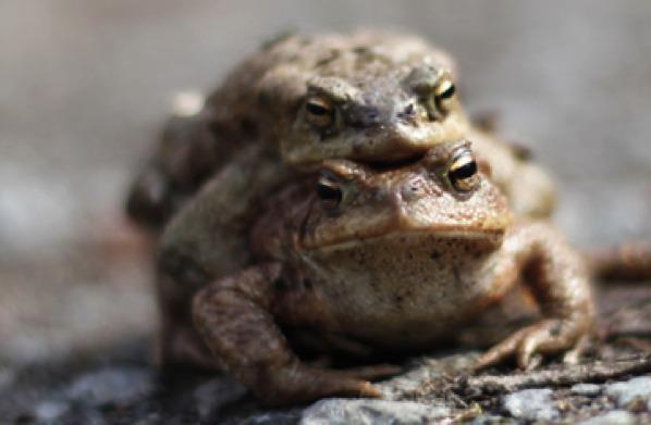 360 Toads 0401