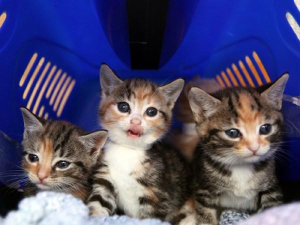 Kitten Bomb