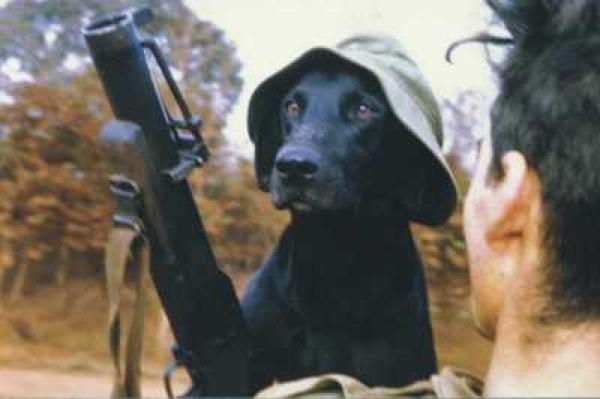 Vietnam Dog