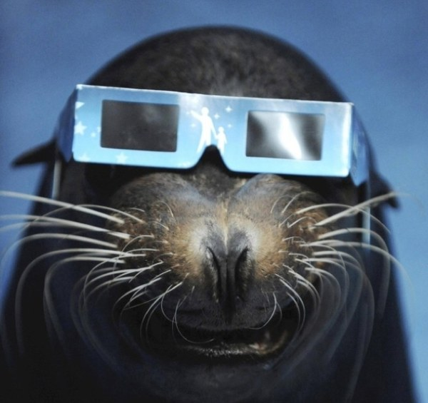 Seal watching an eclipse