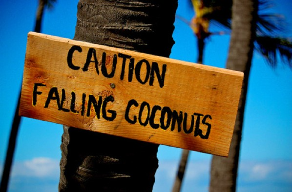 Caution-Falling-Coconuts