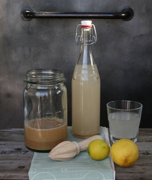 Diy Gingerbeer 1