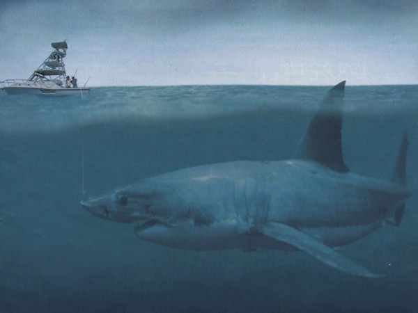 Worlds Biggest Shark Megalodon Caught On Camera Largest Shark In The    Worlds Biggest Shark Megalodon Caught On Camera