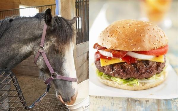 Horse-Burger-2 2452857B