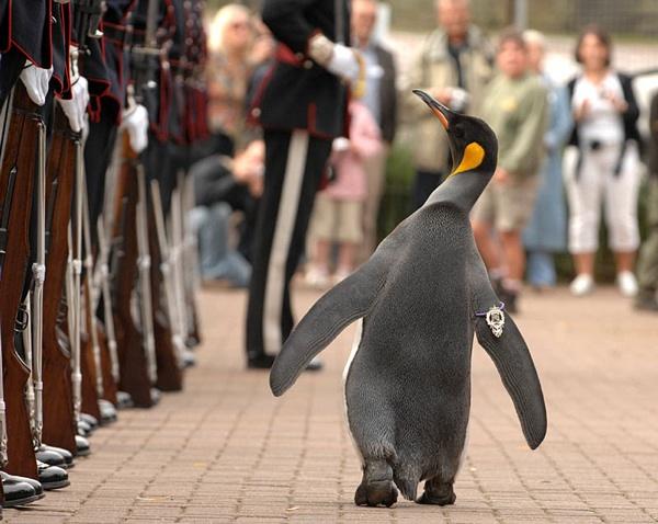 King-Penguin-Nils-Olav