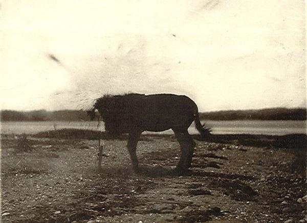 1881 Mule
