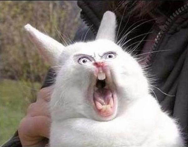 Fluffy-Bunny-My-Ass
