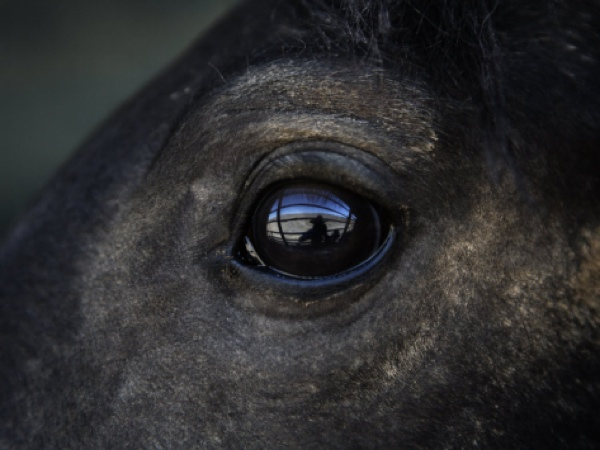 Melissa-Farlow-Captured-Wild-Horse-Eyes-His-Surroundings-After-Capture I-G-40-4041-S29Lf00Z