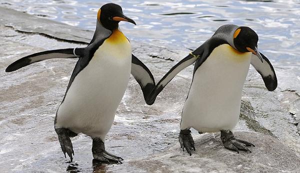 Gaybirds