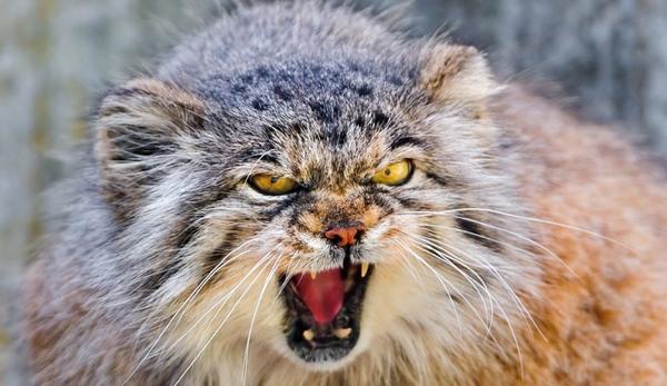 Man-Sues-Cat-Owner-2013