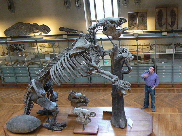 Megatheriumpmnh