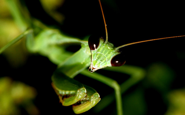 10 Photos of Bugs That Are Actually Cute - Listverse