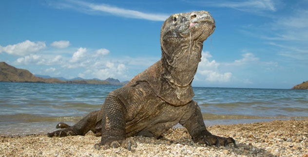 10 Terrifying And Dangerous Turtles and Lizards - Listverse