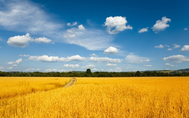 Wheat-Fields-Wallpaper-1