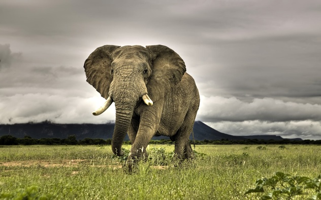 Best-Photo-Of-African-Bush-Elephant