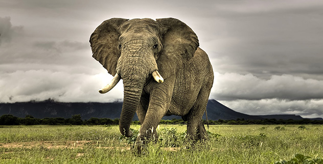 8 Endangered Species Still Hunted