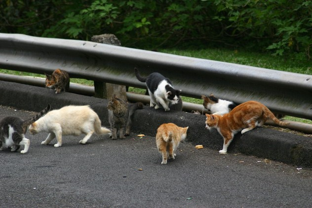 A_pride_of_Feral_cats