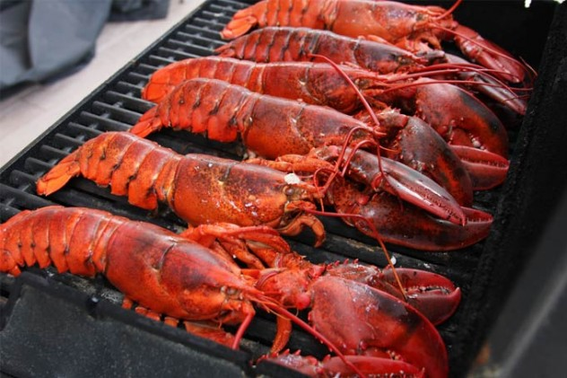 lobster