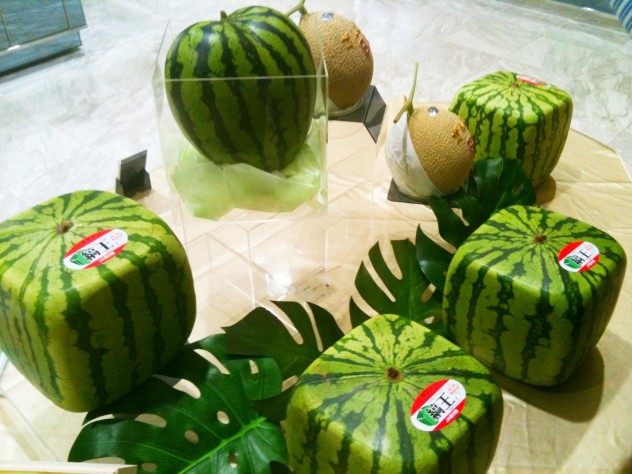 how to grow square watermelon