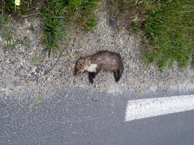 dead-animal