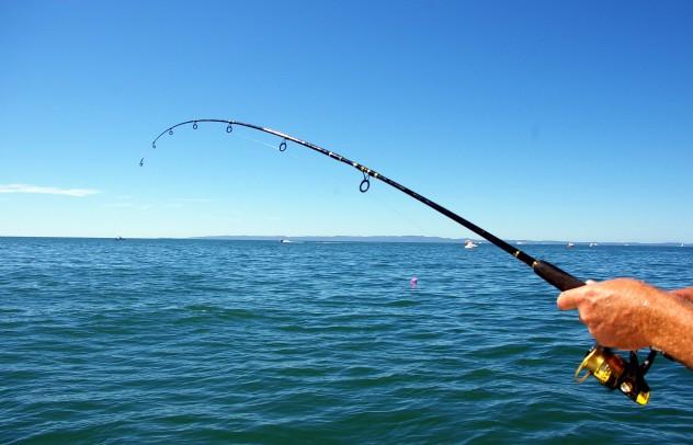 fishing-rod31