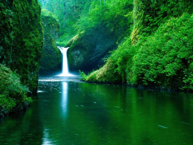Green-Jungle-Nature-Wallpaper