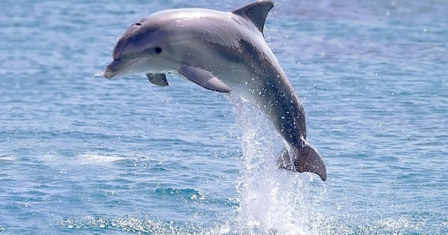 10 amazing dolphin superpowers