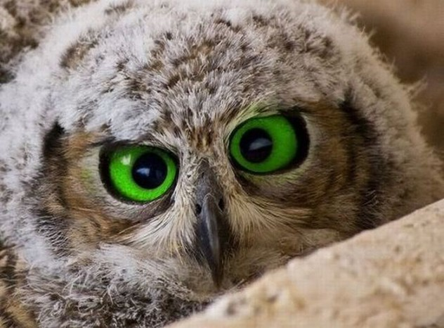 10 Awesome Facts About Owls Listverse