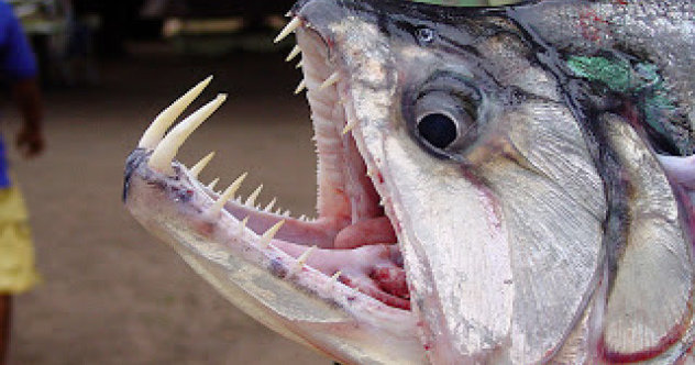 10 Terrifying Creatures Of The Amazon River - Listverse