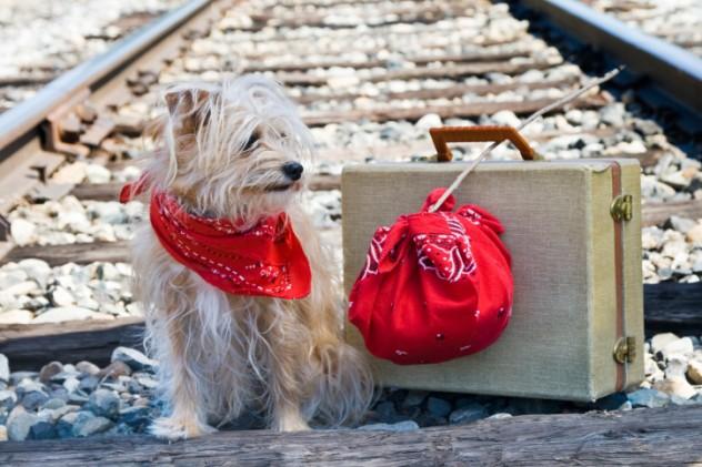 Railway dog