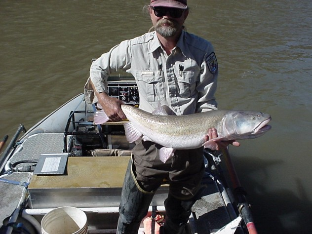 Biologist with Colorado pikeminnow