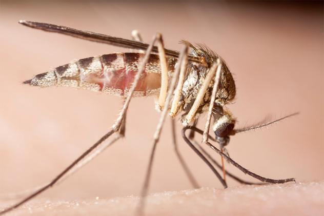 10- mosquito