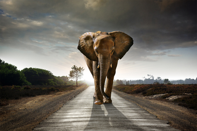 3- elephant