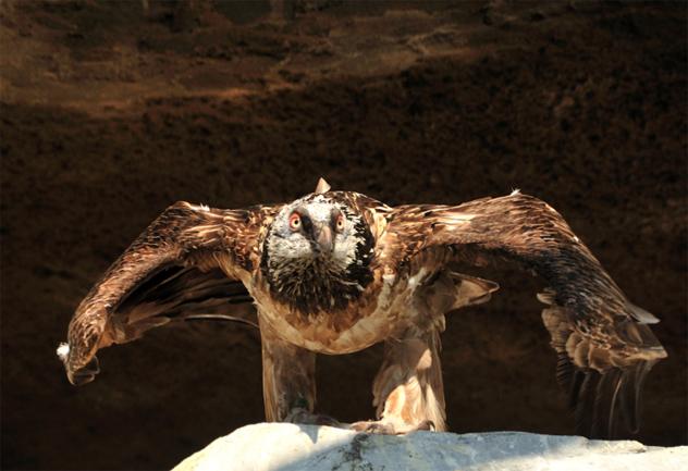 6- hawk
