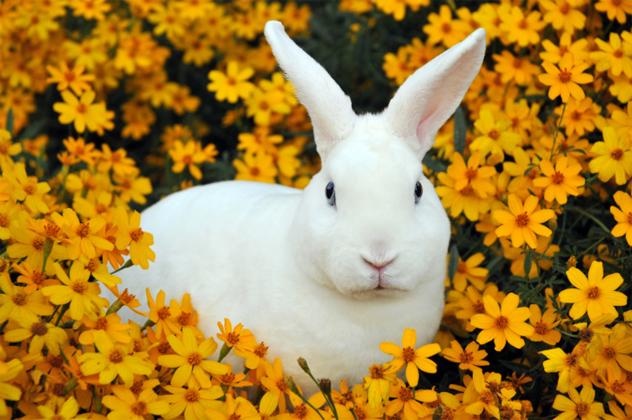 2- rabbit