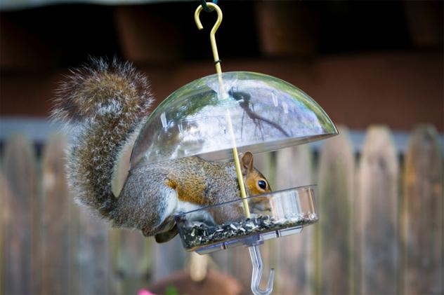 7- bird feeder