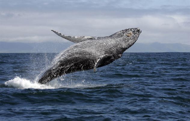 8- whale